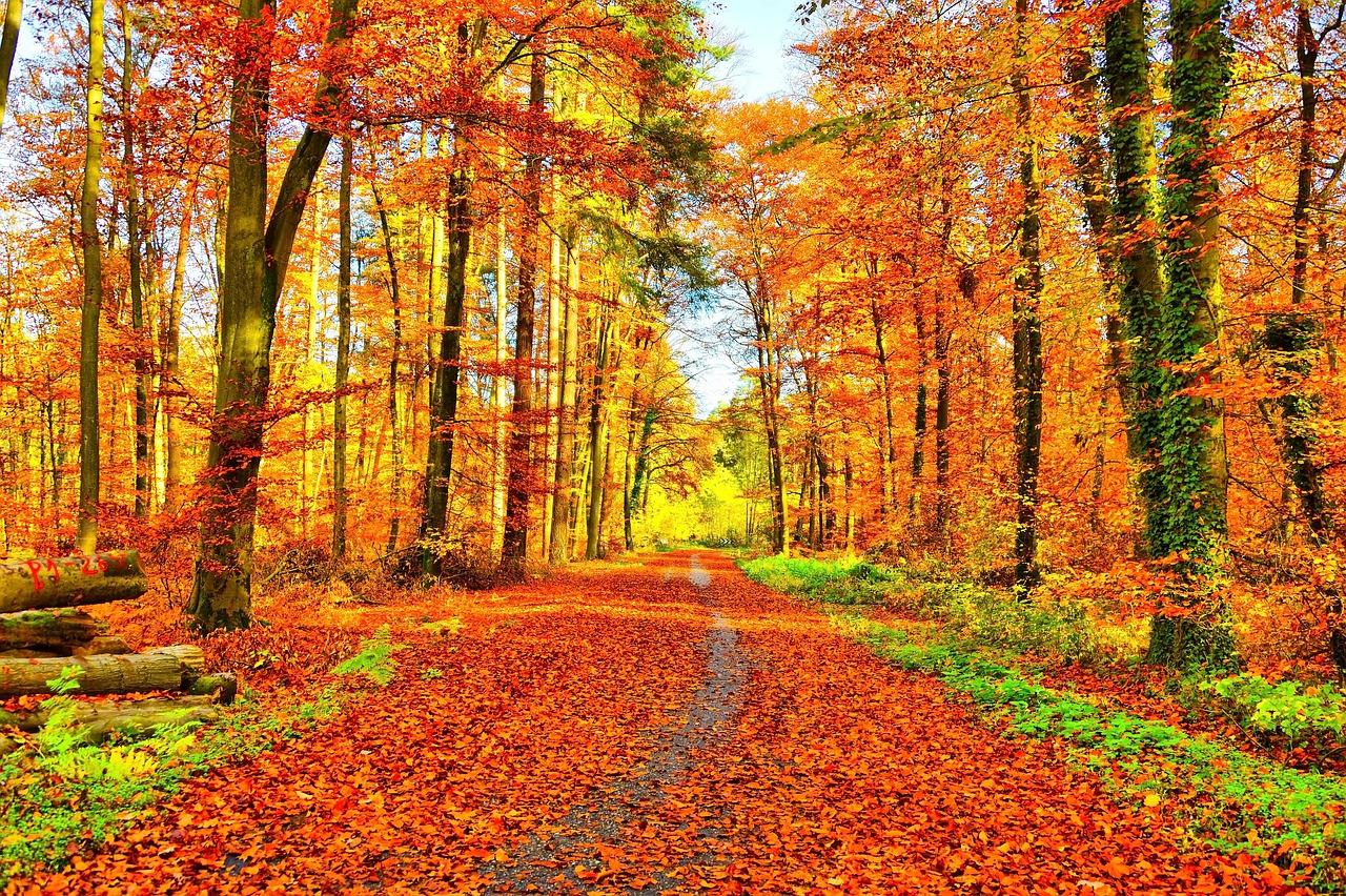🍁 C'est déjà l'automne !!! 🍁